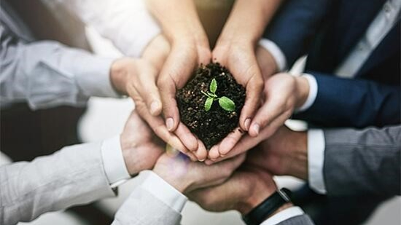 Several hands all holding a growing plant in soil